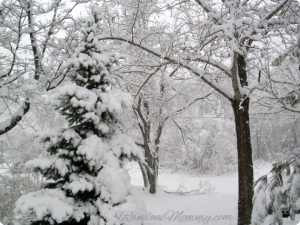 Lots of Snow and Pretty Pics!