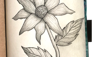 flower pencil sketch